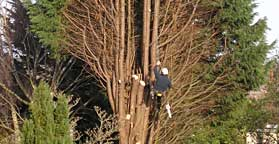 Tree Pruning / Removal